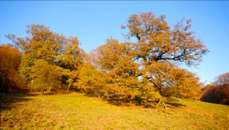 bäume vier jahreszeiten